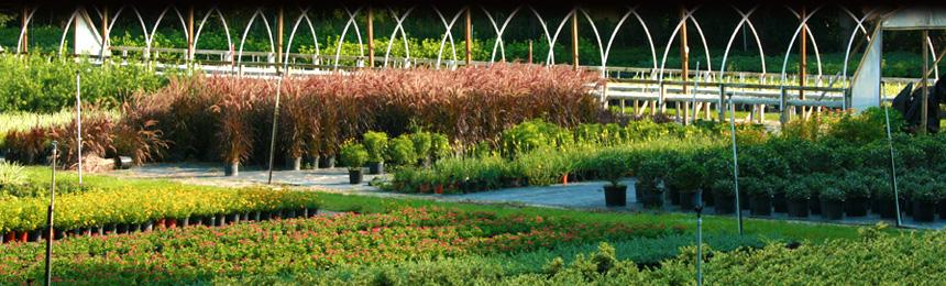 Williams Plant Nursery